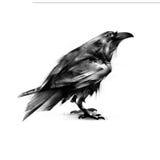 Gemalte schwarze Krähe auf einem weißen Hintergrund Lizenzfreies Stockfoto