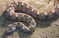 Gemalte sehen-eingestufte Viper 1 Lizenzfreies Stockbild