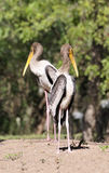 Gemalte Storchpaare Stockfotografie