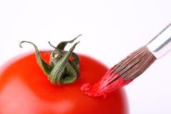 Gemalte Tomate mit Pinsel Stockbilder
