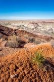 Gemalte Wüste Stockbilder