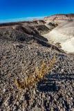 Gemalte Wüste Lizenzfreie Stockbilder