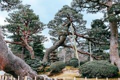 Gemalter Baum Lizenzfreie Stockbilder