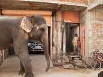 Gemalter Elefant geht durch die alte Stadt Lizenzfreie Stockfotografie