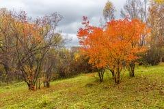 Gemalter Herbstlaub von Anlagen Lizenzfreie Stockfotografie