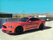 Gemalter Mustang Stockfotografie
