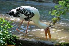Gemalter Storch im Wasser Stockfoto