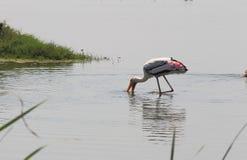 Gemalter Storch-Vogel Lizenzfreies Stockbild
