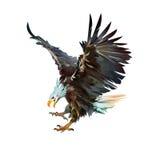 Gemaltes Adlerangreifen lokalisiert auf weißem Hintergrund Stockfotos