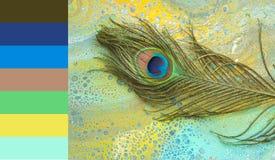 Gemarmorter Hintergrund mit Pfaufedern und Farbproben Stockfoto