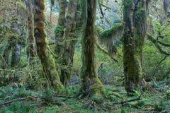 Gematigd regenwoud van Vreedzaam Noordwesten Stock Fotografie