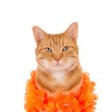 Gember die een oranje boa dragen Royalty-vrije Stock Foto's