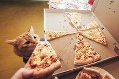 Gember en Pizza royalty-vrije stock afbeeldingen