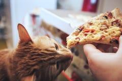 Gember en Pizza stock foto