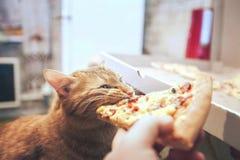 Gember en Pizza royalty-vrije stock fotografie