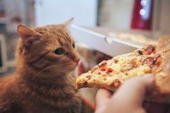 Gember en Pizza royalty-vrije stock foto