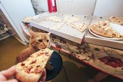 Gember en Pizza royalty-vrije stock foto's