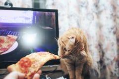 Gember en Pizza stock foto's