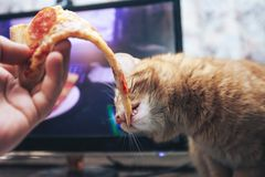 Gember en Pizza stock afbeeldingen