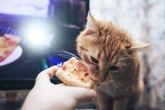 Gember en Pizza stock afbeelding