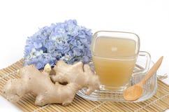 Gember, Ginger Water (Zingiber officinale Roscoe.). Stock Afbeeldingen