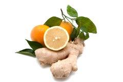 Gember met sinaasappelen Stock Afbeelding