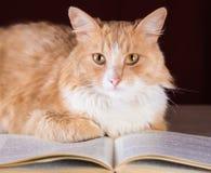 Gember pluizige kat met gele ogen die op het boek liggen Royalty-vrije Stock Afbeelding