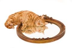 Gemberkat die op een oude spiegel liggen Stock Foto