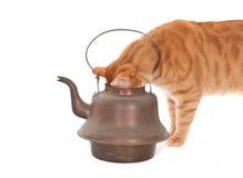 Gemberkat en een theepot Stock Foto