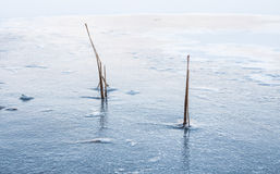 Gemeenschappelijke Bies die in het Landschap van de Ijswinter wordt bevroren Stock Fotografie
