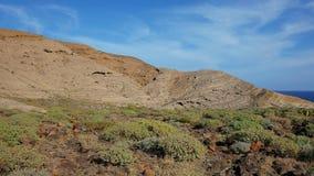 Gemeenschappelijke endemische flora zoals Psammophytes, Euphorbias en andere spurges die de basis van Montana Pelada, Tenerife be stock afbeeldingen