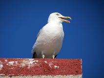 Gemeenschappelijke meeuw of Larus-canuszitting op een dak Royalty-vrije Stock Foto's