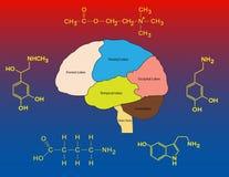 Gemeenschappelijke neurotrasmitters Royalty-vrije Stock Afbeeldingen