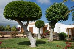 Gemeißelt Bäume in einem Garten Stockbild