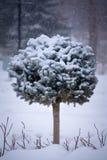 Gemeißelter immergrüner Miniaturbaum in der schneebedeckten Szene lizenzfreie stockfotos