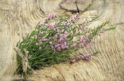 Gemeine (gemeine Heide) Blumen des Calluna Stockfotografie