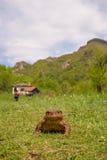Gemeine Kröte mit Landschaft Lizenzfreie Stockfotografie