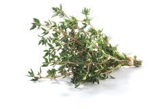 Gemeiner Strauch frischer Thymusdrüse Kräuter des Thymians lizenzfreie stockbilder