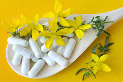 Gemeines Johanniskraut - Hypericum perforatum - Antidepressivum Lizenzfreie Stockfotografie