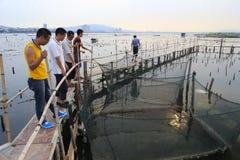Gemeinsame Forschung der Fischer in der Aquakultur Stockbilder