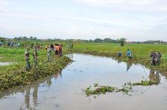 Gemeinschaft s?ubern den Fluss von den Hyazinthenplagen stockfoto