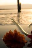 Gemelli nel lago Fotografie Stock Libere da Diritti