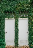 Gemello delle porte bianche, con le foglie verdi, pianta Immagine Stock