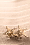 Gemelos de los pescados de las estrellas de mar o de la estrella Imagen de archivo