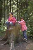 Gemelos que juegan en un tocón de árbol Imagen de archivo libre de regalías