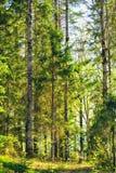 Gemengd Bos bij de Zomer Stock Afbeeldingen