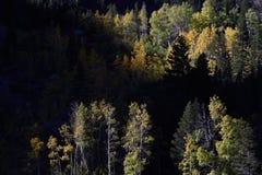 Gemengd bos boven Convict Meer, John Muir Wilderness, Siërra Nevada Range, Californië Stock Afbeeldingen