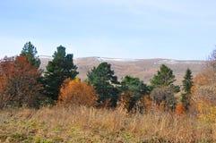 Gemengd bos in de Bergen van de Kaukasus Rusland Stock Afbeeldingen