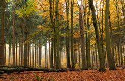Gemengd bos in de herfst stock foto