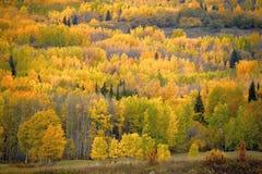 Gemengd Bos in de Herfstkleuren Stock Foto